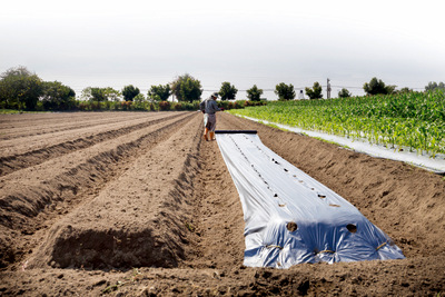 以有機農業保護土壤