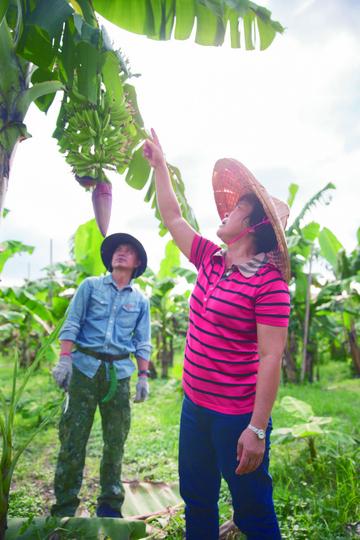 巡視香蕉園