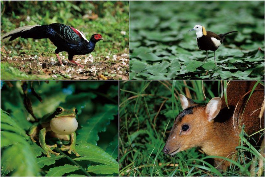 綠色保育 為田間動物留生機