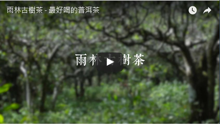 雨林古樹茶影片