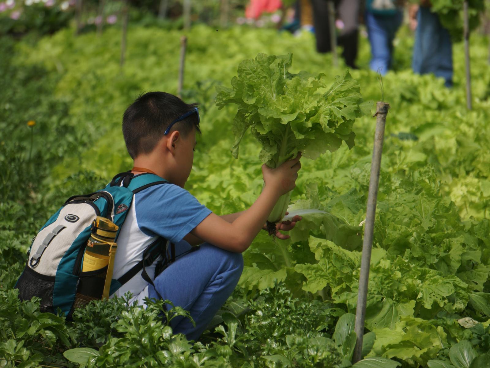 臺大山地農場採菜體驗