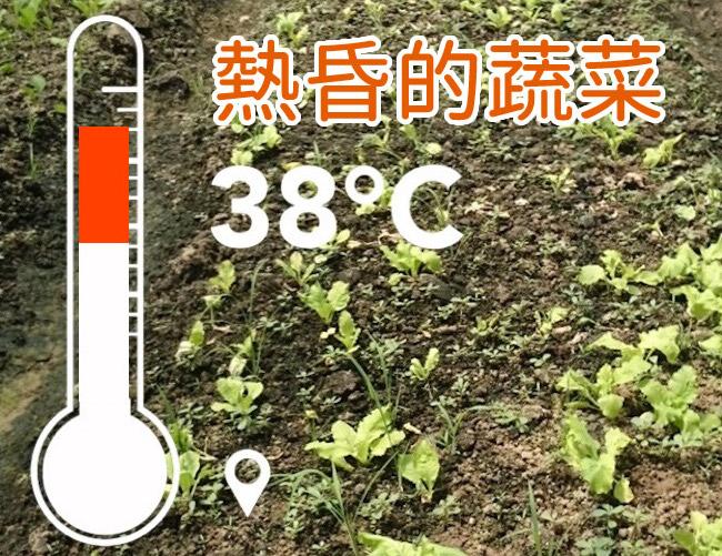 熱昏的蔬菜(日燒現象)
