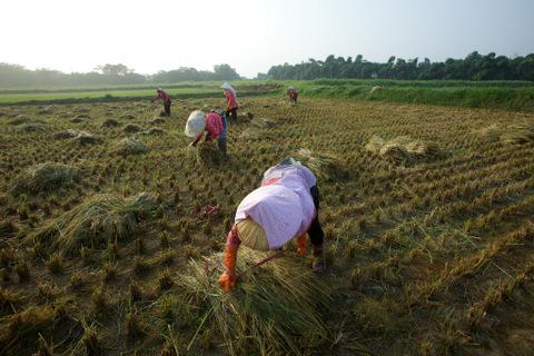農友彎著腰向大地表達謙卑,投入有機耕作是為了眾人的健康與後代子孫的永續淨土。