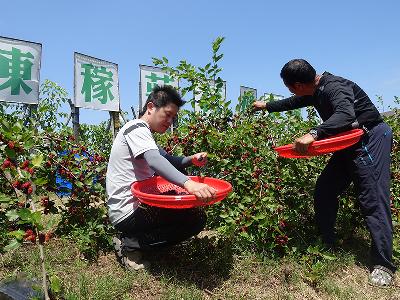 30年保持高品質、天然的好滋味__陳稼莊自然果園
