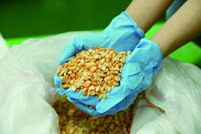 有機硬質玉米